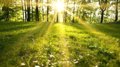 Photo of Sladić o sličnosti 2020. i 2007. godine, evo kada će nas sunce ogrijati, i da li ćemo imati vrelo ljeto