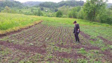 Photo of Dobra vijest za bh. poljoprivrednike: EU objavila poziv za dodjelu tri miliona KM bespovratnih sredstava