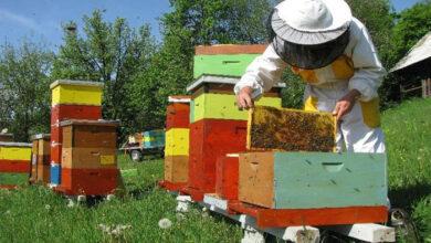 Photo of Pčelari preživjeli lošu sezonu, za jačanje pčelarstva potrebna ozbiljnija podrška države