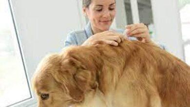 Photo of Uz nekoliko savjeta zaštitite vašeg psa od ugriza krpelja